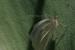 moth-on-plant-leaf